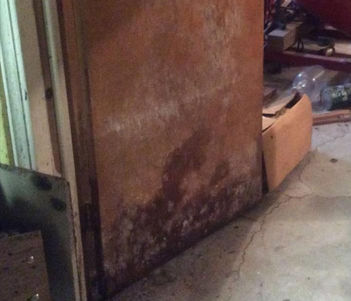 Damp and Dark = Mold